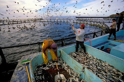 Indonesia's aquaculture industry poised for take-off?