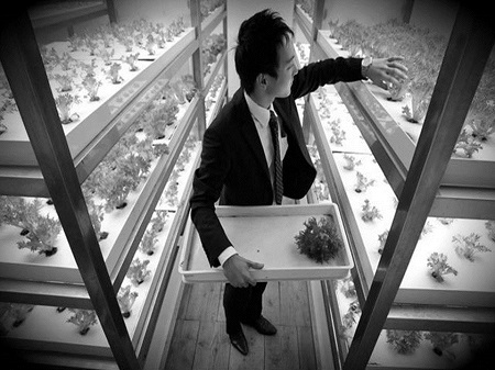 Indoor farming – Is Japan pioneering the new face of agriculture?