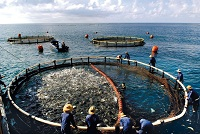 Spire speaks at Indonesia Ocean Investment Summit 2014 on aquaculture opportunities