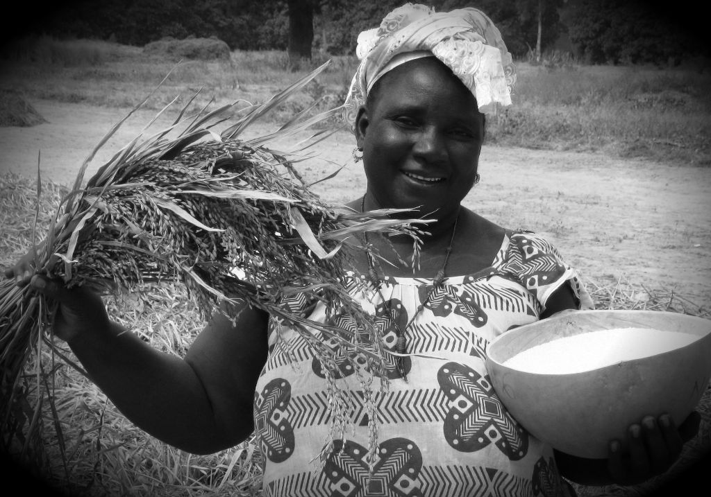 USAID helps African women improve rice farming skills