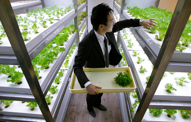 Indoor Agriculture: Feeding the future